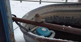 凍住不能走!小鳥被黏在鐵管上 好心男暖心融化(圖/翻攝自https://www.youtube.com/watch?v=J8pBeKqgXw0 美國,新年,小鳥,鐵欄杆,水箱,自由,雙腳