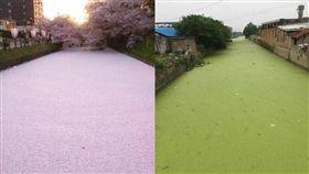 對抗日本決美「櫻花河」 陸網友發現最新秘境「抹茶河」 圖/翻攝自微博