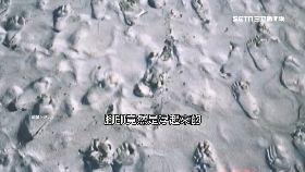 白沙媽顯靈0900