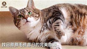 ▲圖/翻攝自PetTalk官網