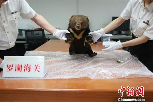 中國大陸一隻年幼黑熊遭殘殺後製成標本(圖/翻攝自中新網)http://www.chinanews.com/sh/2018/05-16/8515594.shtml