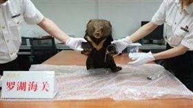 中國大陸一隻年幼黑熊遭殘殺後製成標本(圖/翻攝自中新網) http://www.chinanews.com/sh/2018/05-16/8515594.shtml