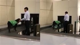 機場,檢疫犬,狗 圖/網友Maggie Hsieh授權提供