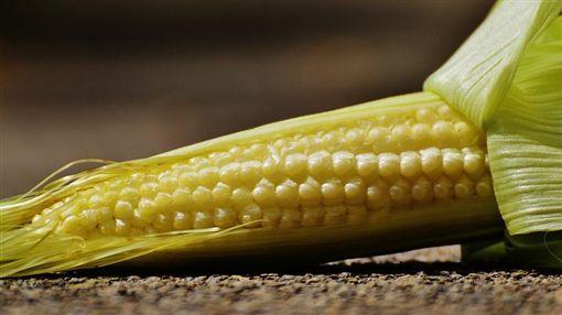 玉米筍/pixabay