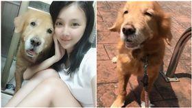 高雄,黃金獵犬,布丁,骨刺,可愛,狗(圖/臉書 李妡蕾)