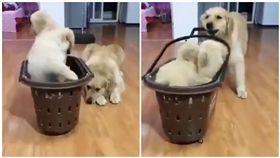 狗,黃金獵犬,狗肉湯,廣告,手機,包包,鍋子,反擊(圖/翻攝自哈哈寵物臉書)