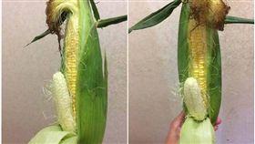一名男網友今(23)日早打開冰箱時,驚見老婆買的玉米「姊夫」,他無奈地問「我有需要注意什麼東西嗎?」其他網友看到後,紛紛笑虧「請物盡其用,謝謝!」 (圖/翻攝自爆廢公社)