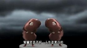 -腎臟-腎結石-腎病-(圖/翻攝自YouTube-TheHealth99 頻道)