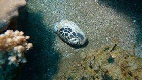 保育類,海龜,獵食,殘骸,丟棄,居民,Scuba Dive Taiwan 圖/翻攝自臉書Scuba Dive Taiwan