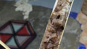泰國,竹筒飯,蜘蛛,加料,食安,工廠,料理 圖/翻攝自泰國網