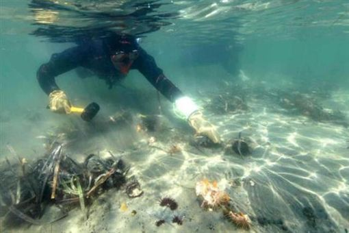 澳洲,海膽,大陸,網友,生態,環境 圖/翻攝自澳洲新聞網