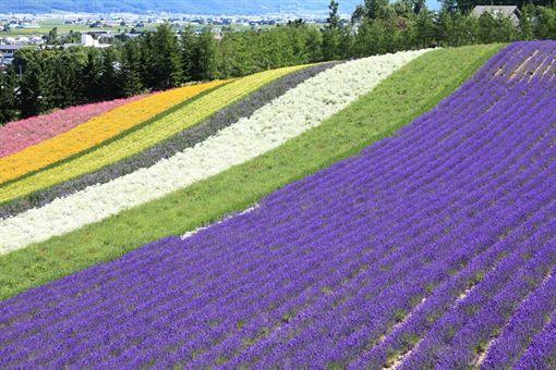 夏日遊北海道就對了!美食美景報你知 業配 旅遊,北海道,花田,洞爺湖,花火,美食,溫泉