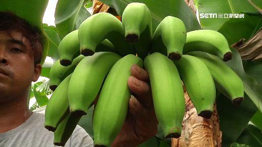 香蕉、鳳梨「價格賤」 綠議員:銷大陸最快-香蕉-