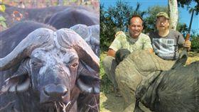 南非,Claude Kleynhans,水牛,報仇,獵人,戰利品,長頸鹿,狩獵,Levubu River,獵殺 圖/翻攝自臉書 https://goo.gl/8T6CJj
