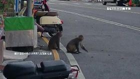 潑猴鬧墾.丁0900