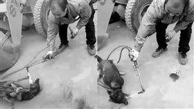 狗肉節將至 殘忍虐殺活狗引爆連署 狗肉節,玉林,連署,抵制,虐殺,殘忍,愛狗,美中貿易戰 https://www.petitiontime.com/Petition-Chinese-dog-eating-festival-starts-in-4-weeks-take-action-now-t-4471