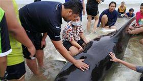 胃有8公斤塑膠袋…領航鯨命喪泰國 (圖/翻攝自Thon Thamrongnawasawat臉書)