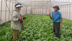 中醫退休轉務農 種出優質有機蔬菜退休中醫師黃博元(右)在台南市佳里區經營有機農場,採網室配合輪作與滴灌栽培方式,種出優質有機蔬菜。(農糧署南區分署提供)中央社記者楊思瑞傳真 107年6月3日