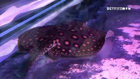 日月潭魟魚1200