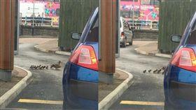 英國,林肯郡,鴨子,鴨群,麥當勞,得來速,車道,碾死(圖/翻攝自Vicky Smith臉書)