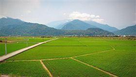 稻田,花蓮東里火車站 圖/攝影者pang yu liu, Flickr CCLicense https://flic.kr/p/FvVo3L