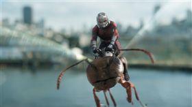 ▲▼《蟻人與黃蜂女》電影劇照。(圖/迪士尼提供)