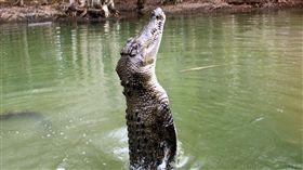 鱷魚猛撲撕咬!湖中受洗秒變「血洗」 衣索比亞,阿爾巴門奇,新教,牧師,阿拜亞湖,受洗,鱷魚 https://flic.kr/p/aEEV1k (圖/攝影者Travis, Flickr CC License)