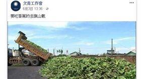 香蕉,農民,民進黨,林俊憲,農糧署,文青工作會,國民黨