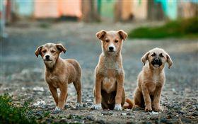 狗,毛小孩,可愛,流浪犬,圖/翻攝自Pixabay