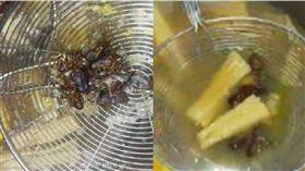 吃火鍋撈出8隻蟑螂 店家不認帳「除非蟑螂排著隊進鍋」 圖/翻攝微博