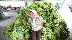 蕉農多可憐1200