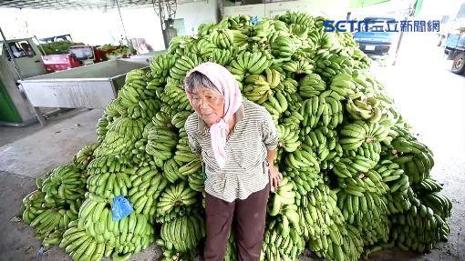 「不夠成本」5元收購格外品 百噸香蕉餵豬