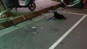 找到車位…「小黑」肉身霸占讓他崩潰 網笑:罐罐是停車費 圖/翻攝自爆料公社臉書