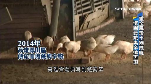 爐渣廢棄場無人管 放養鴨恐含重金屬