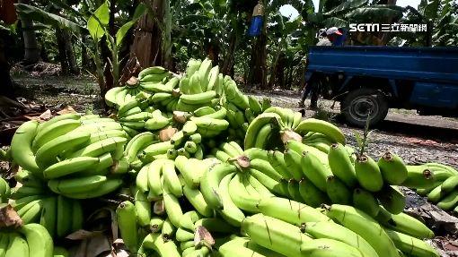 粉專貼舊聞挨批 農委會報警轟:抹黑香蕉
