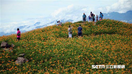 花蓮旅遊六十石山金針花海。(圖/記者簡佑庭攝影)