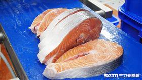 全聯物流中心,鮭魚。(圖/記者馮珮汶攝)