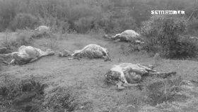非盜獵驢皮1600