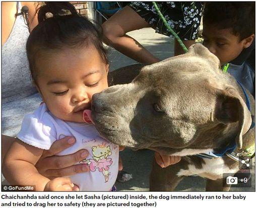 比特犬發現鄰居家失火,機警要救飼主與小主人。(圖/翻攝Daily Mail)