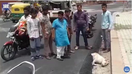 印度一隻狗狗慘遭瀝青活埋、壓路機輾壓慘死路邊(圖/翻攝自Daily Mail YouTube)