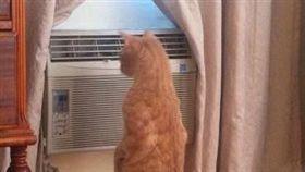 女主拖著疲憊身軀 進門驚見貓開冷氣。(圖/翻攝自臉書爆怨公社)