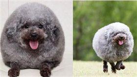 日本,毛小孩,寵物,創意,寵物美容,造型,海豹,狗,萌/翻攝自IG