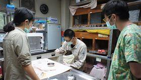 動物救傷照養 全年無休任務重行政院農業委員會特有生物研究保育中心野生動物急救站19名人力每年治療500到600多隻受傷野生動物,收容超過2000隻,工作還有動物復健、收容、餵養等,並執行多項研究計畫,任務繁重。中央社記者蕭博陽南投縣攝 107年6月16日
