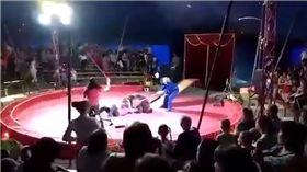 影/馬戲團悲歌!黑熊「罷工」慘遭工作人員毒打 圖/翻攝自YouTube
