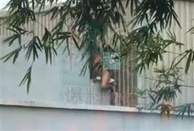 新竹一名男子全裸當街摩擦枕頭,過程全被路過民眾拍下上傳。翻攝自新竹爆料公社