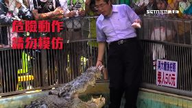 台南選舉拚1800