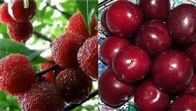 水果、李子、楊梅。(組圖/翻攝自Pixabay、健康好生活YouTube)