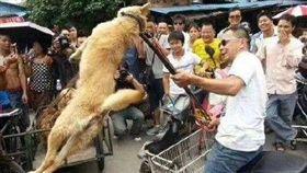 廣西玉林「狗肉節」,狗狗,毛小孩,宰殺(圖/翻攝自微博)