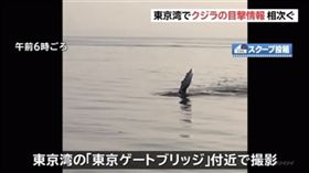 東京灣多人目睹15公尺大海怪!當局呼籲附近船隻注意 推特