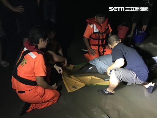 苗栗保育類糙齒海豚擱淺/翻攝畫面
